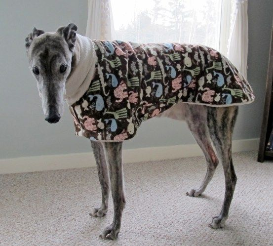 7 best italian greyhound clothes images on Pinterest | Greyhounds ...