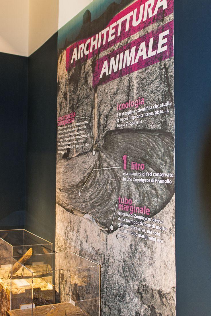 Graphica. – Comune di Pontebba: Mostra geologica permanente - Applicazione a parete con pellicola Tattoo Wall