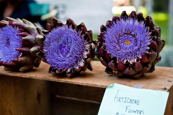 artichoke flowers • via tartelette