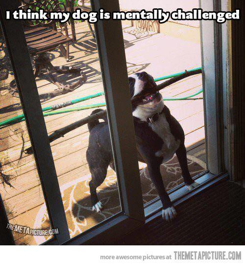 Hahaha! Silly dog!