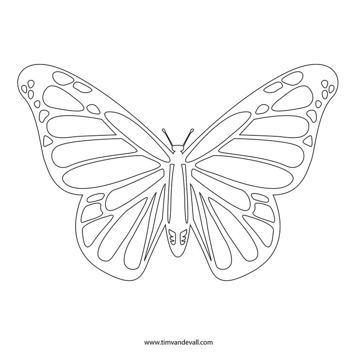 Best Motyle Images On   Butterfly Template