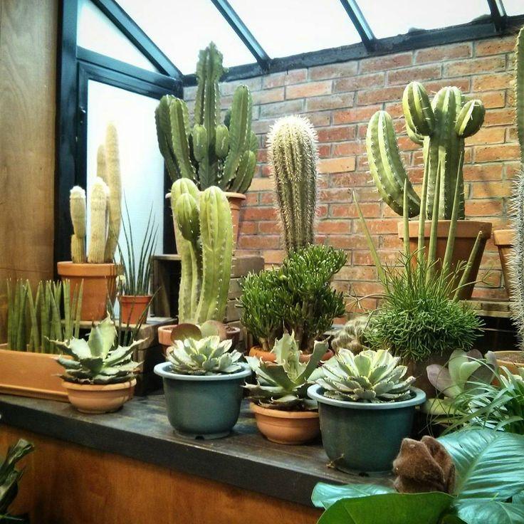 3445 best cactus love images on pinterest. Black Bedroom Furniture Sets. Home Design Ideas