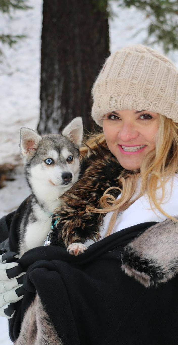 Miniature Huskies For Adoption In 2020 Alaskan Klee Kai