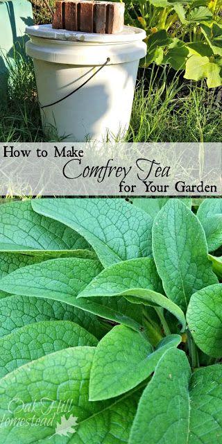 How to make comfrey tea for your garden.