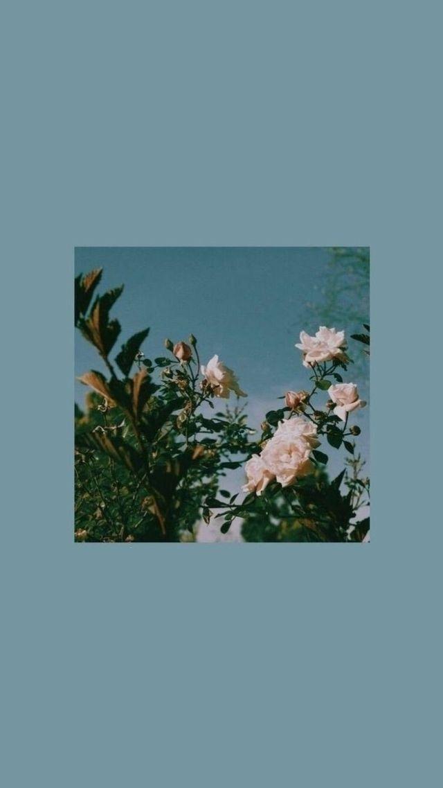 #wallpaper #simple #aesthetic #phone #flowers #flo… –