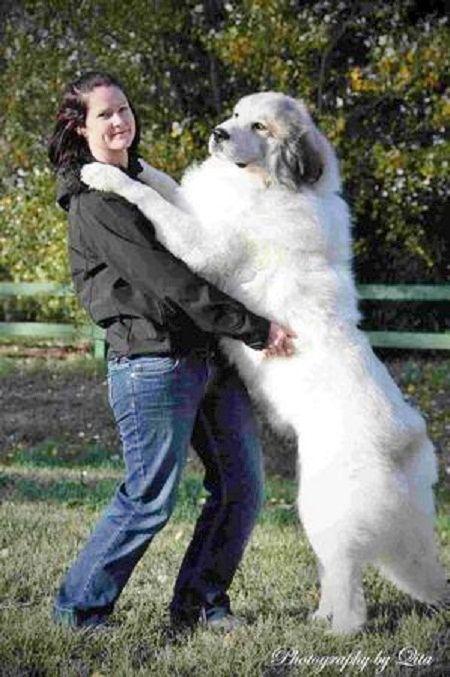 Best Dog Breeds For Car Rides