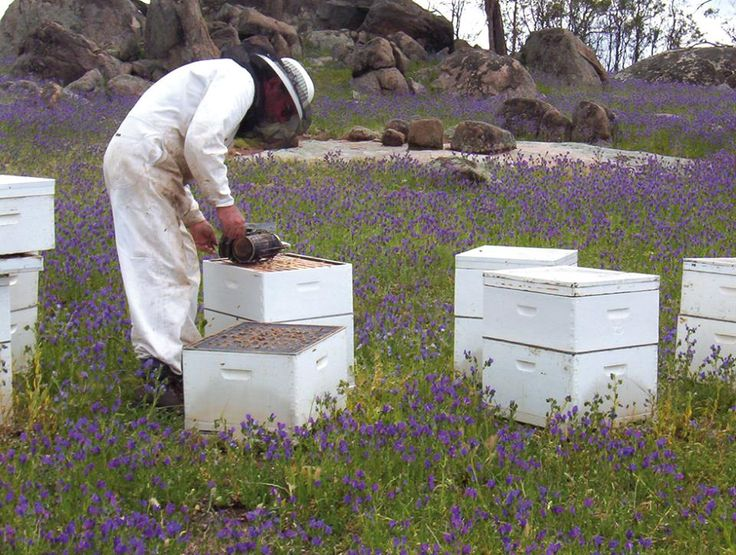 Have you ever wondered why beekeepers always wear light coloured protective suits? Bees are attracted to dark colours, which can excite them. So to ensure a calm interaction with the bees, beekeepers wear light coloured clothing.