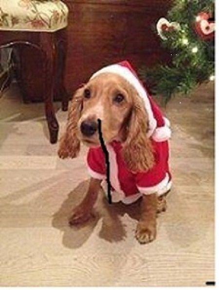 Bellissimo cane natalizio. Auguri a tutti voi. Ciao. Silvia.