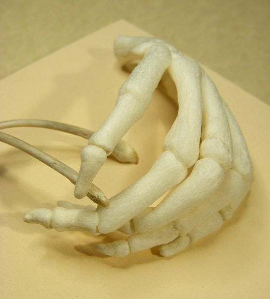 Wish, detail corn starch packing pellets, chicken wish bone on mount board by Patricia Denis #patriciadartist