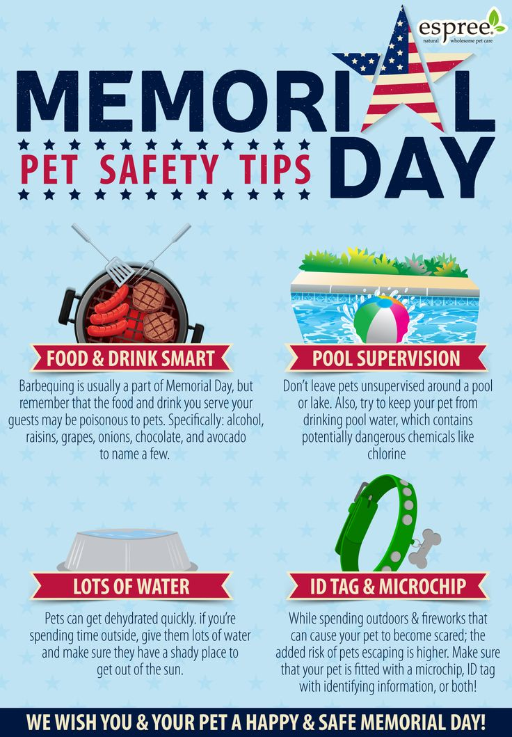 Memorial day pet safety tips holidays pinterest tips