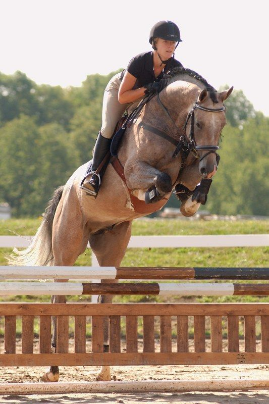 17 Best Images About Equestrian On Pinterest Ralph