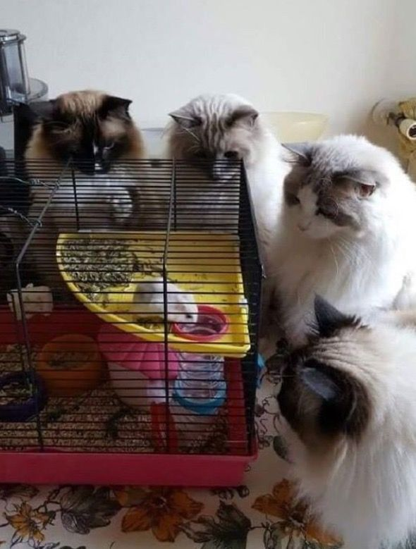Ehmahgerd, what is it Sal? Looks like Dinner to me Dave. But it's so furry!! D'ya think it's gone bad?