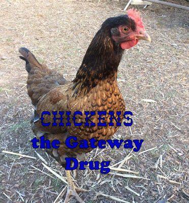 Early Bird Farm: Chickens the Gateway Drug
