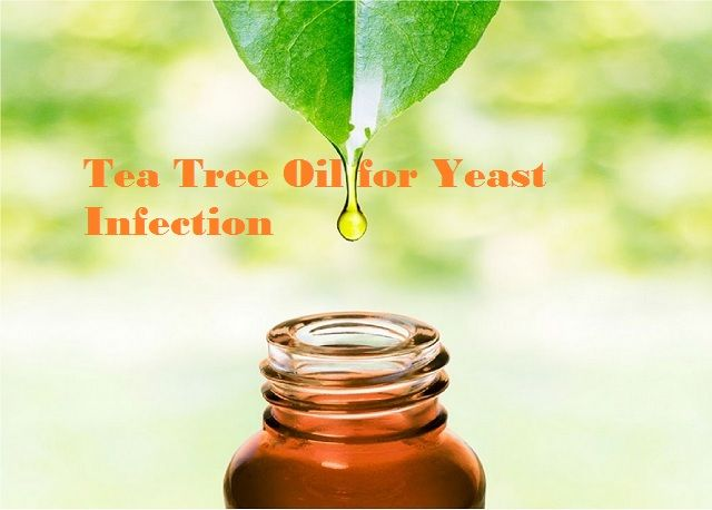 Tea Tree Oil for Yeast Infections. Natural remedies yeast infection, thrush treatment, candida albicans, fungal infection, candidiasis, yeast infection in women, yeast infection in men, yeast infection on skin, yeast rash, candida yeast infection, oral yeast infection.