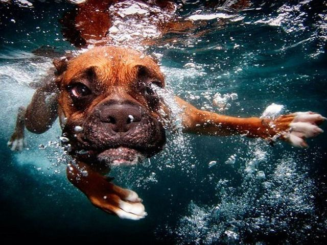 Dogs In Water – A New Game for Dogs