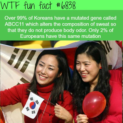 Koreans have a gene that make their sweat odorless - WTF fun fact