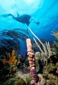 St. Kitts Snorkeling http://www.viator.com/tours/St-Kitts/St-Kitts-Scuba-Diving-Adventure/d930-5226SCUBA  #SandorCity Contest: St Kitts #TravelBrilliantly