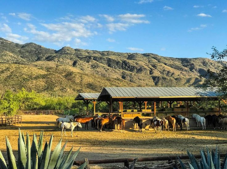 Tanque Verde Ranch |  Located on 60,000 acres of Tucson's most breathtaking desert landscapes, nestled among the Rincon Mountains and adjacent to Saguaro National Park and Coronado National Forest. | Photo via IG user @arizonaoutsiders | Click on the pin for more info and additional Guest Ranches in the Tucson area.