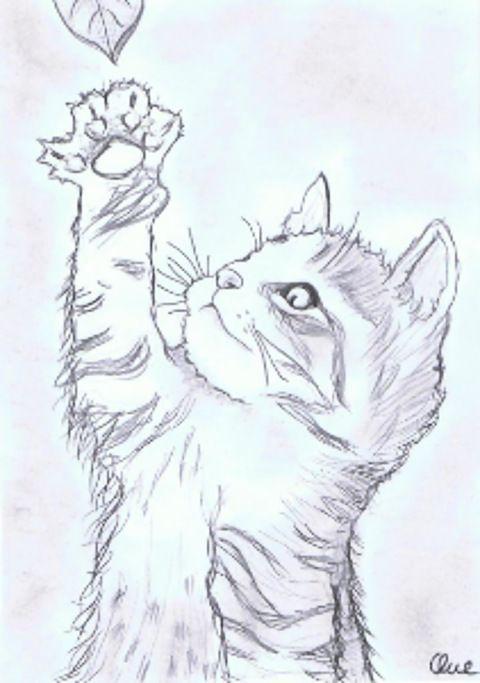 zeichnung bleistift katzenbaby von pilli  zeichnung
