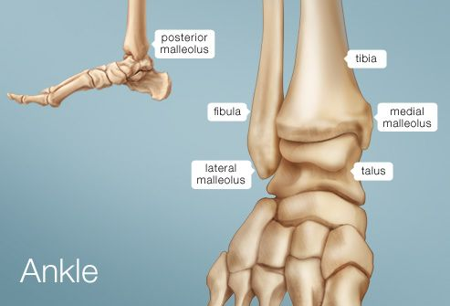 Picture of the Ankle © 2012 WebMD, LLC. All rights reserved.