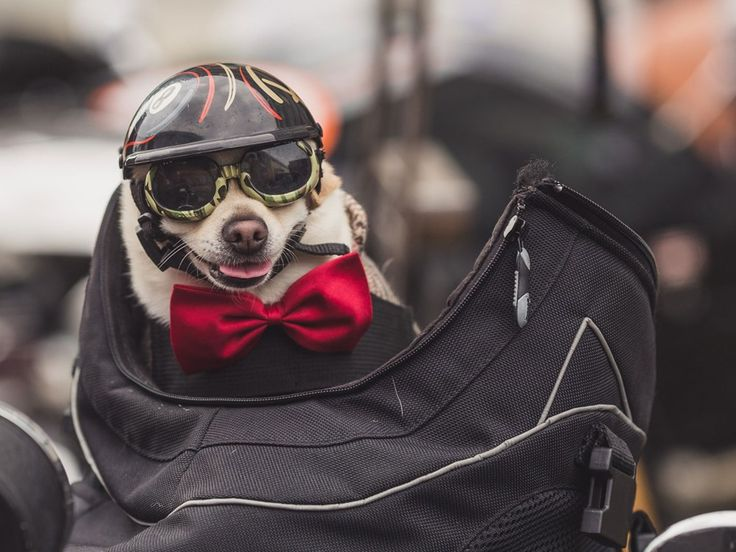 Motorcyclists go dapper for the Distinguished Gentleman's Ride