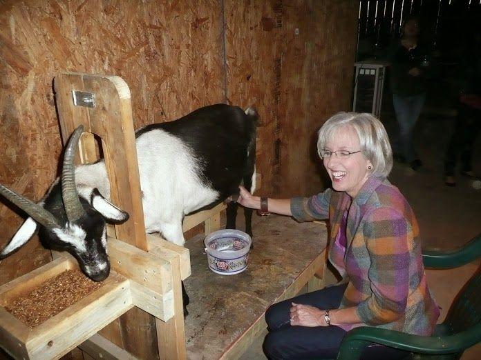 Agenda lui Marian: Construirea unui cotet mixt - capre, gaini, curci, rate, porci
