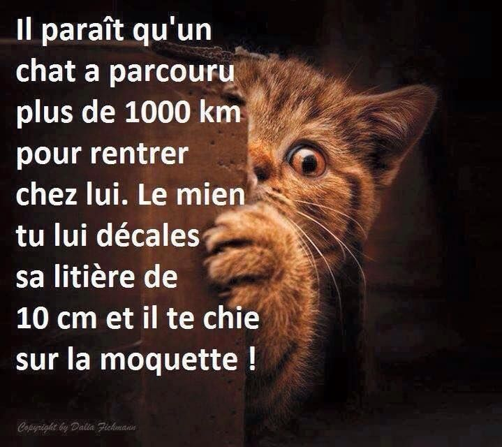 les 17 meilleures id es de la cat gorie humour sur les chats sur pinterest humour dr le de. Black Bedroom Furniture Sets. Home Design Ideas