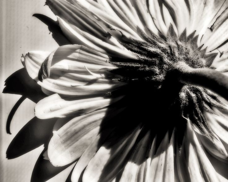 Black&White Floral Theme by Maria Bruscha on 500px