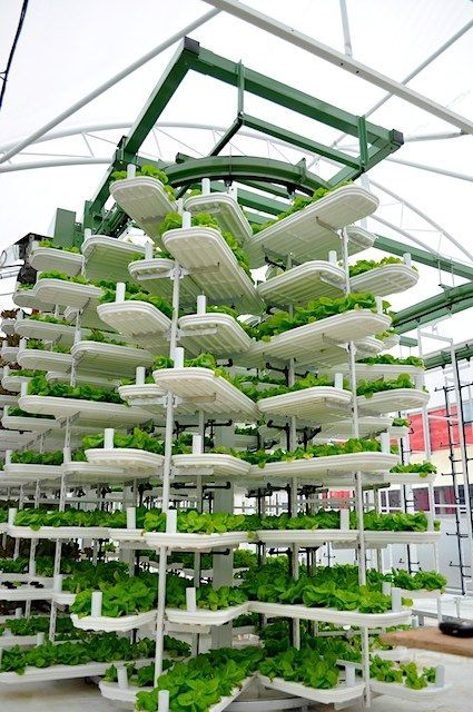 World's largest aquaponics--not sure how you harvest these, but it looks like it's on some kind of lazy susan device that probably brings it to a harvesting platform at some point.