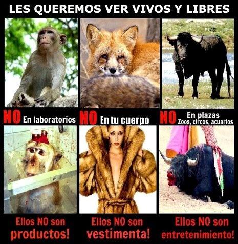 NO!!! al maltrato animal!