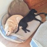 It's a Dog's life – It's me or the dog
