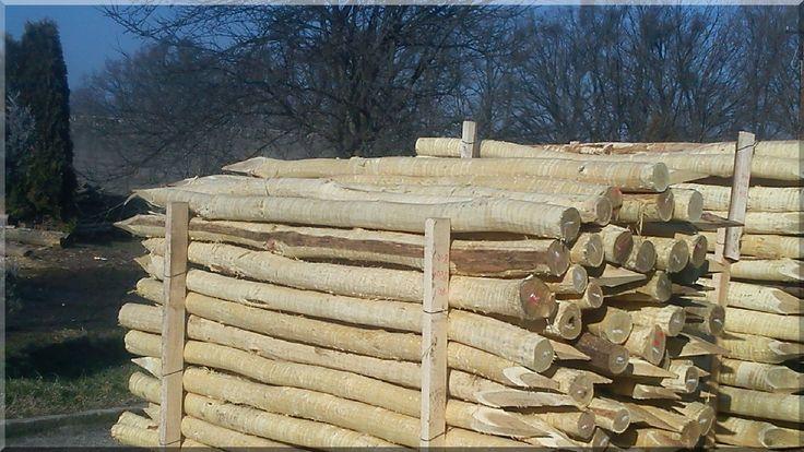 angespitzte Robinienholzpfähle