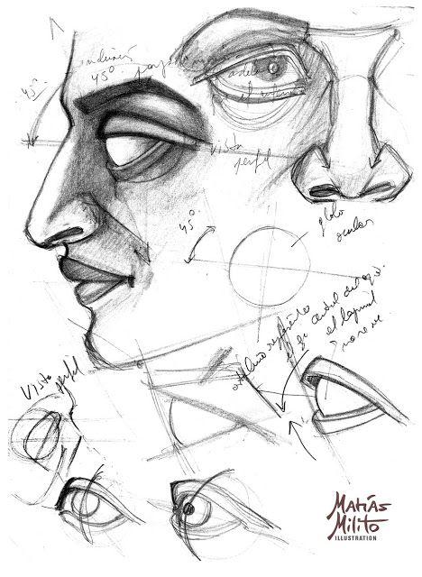 STUDIES OF THE HEAD / ESTUDIOS ANATOMICOS DE LA CABEZA