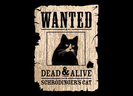 Schrödinger's cat | awesomeness. | Pinterest