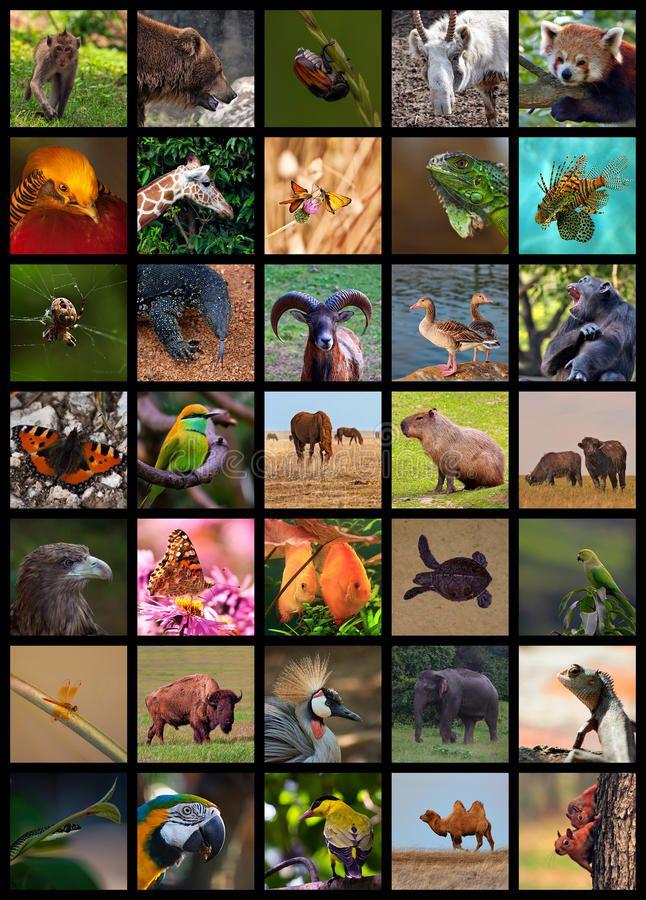 60+ Best Animal Magazine Collages images in 2020   magazine...