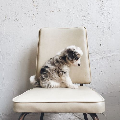 Puppy dog on a chair