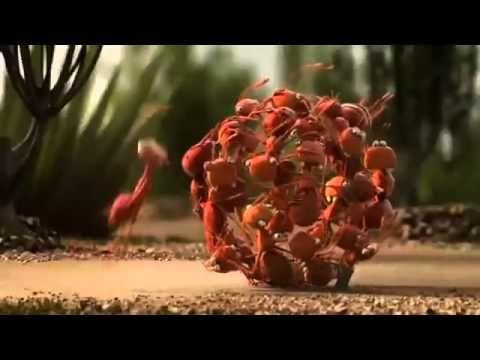 [Pixar-2014] The Power of Teamwork - Short Film