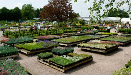 The Garden Club: this gardening centre has all the plants, nurseries and shrubbery you'll need to turn your yard into a beautiful garden.