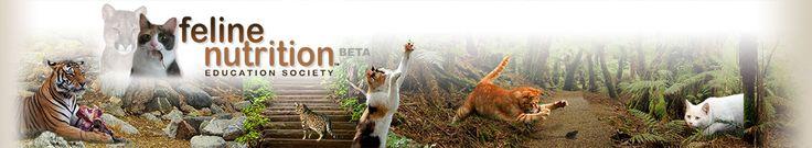 Feline Nutrition