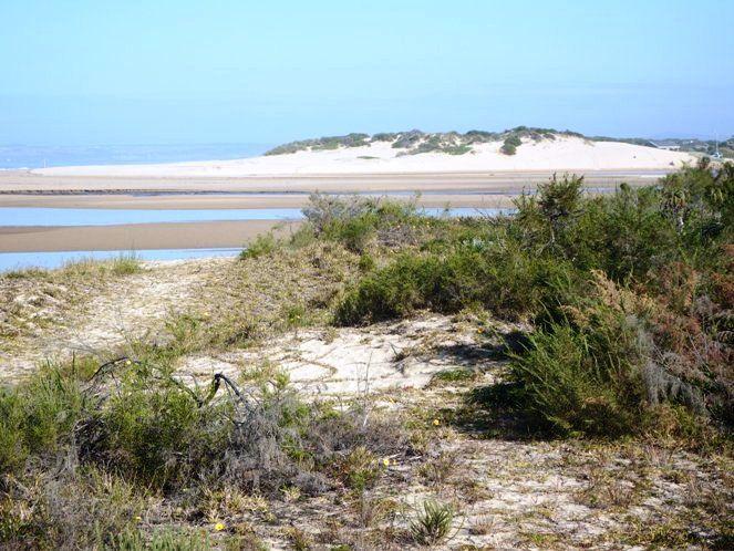 Groot Brak River, just outside Mossel Bay
