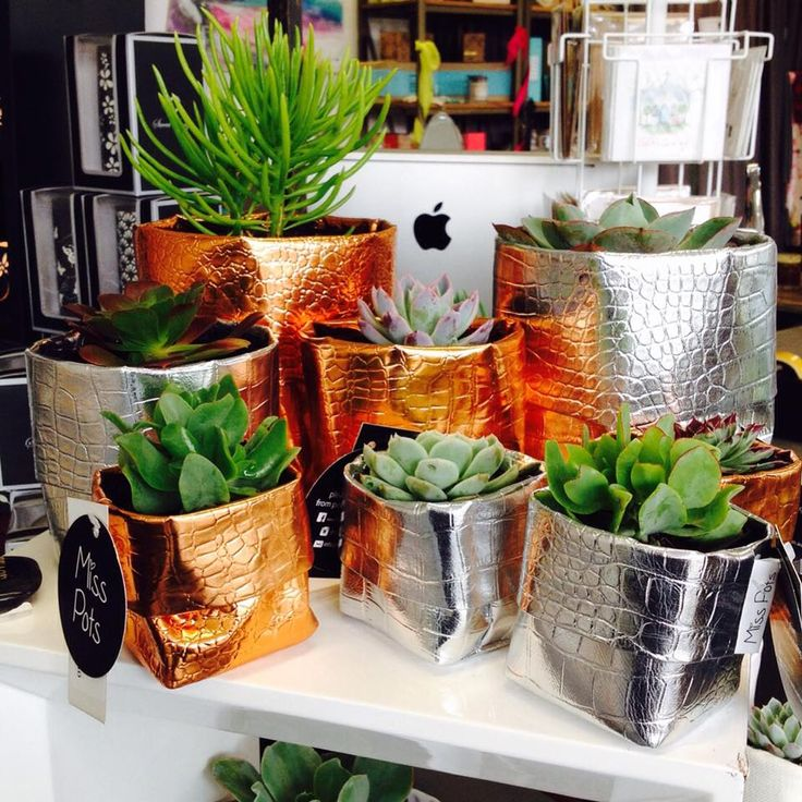 These guys have just arrived! @dcb_designs #fabricpouches #plants #plantpouches #silver #copper #succulent #succulents #misspots #dcbdesigns #dcbdesignskilsyth
