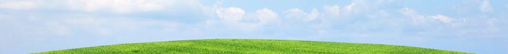 La Salvia para tratar anginas, problemas de encías, enfermedades del hígado y riñones, y otras condiciones.   ECOagricultor