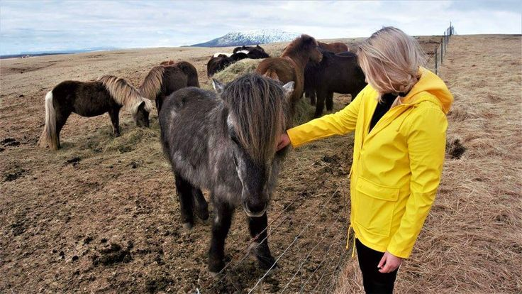 HAPPY #NATIONALUNICORNDAY  did you know that scotlands national animal is the unicorn? Unfortunately to be a true scot we are forbidden to show any photographic evidence of our much loved unicorn (but know that they exist) anywho heres me and a cute horsey in iceland! Have a fab unicorn day xo  @wanderinginwanderland