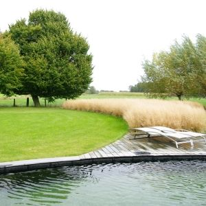 Curve of rounded lawn emphasized by sweep of decking and grasses and billowing trees (by Chris Ghyselen).