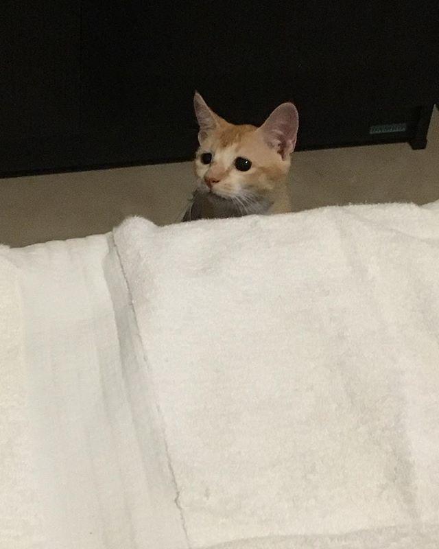パパ~何してんの~❓ #chuty#srilanka#temple#cat#cats#catstagram#cute#cutie#kitty#eyes#gato#gatto#kucing#katze#popoki#happy#Love#straycat #minnie#愛娘#愛猫#愛猫家#ミニー #ミニーちゃん#女の子#gril#おてんば娘 #大好き#かわいい #親バカ部