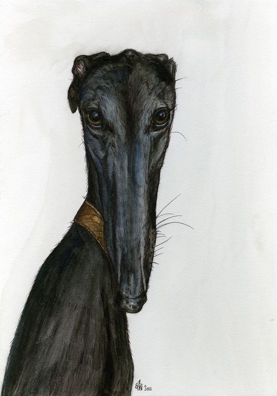I DONT THINK SO - GREYHOUND DOG PRINT. More info here: http://www.etsy.com/listing/58502083/i-dont-think-so-greyhound-dog-print  #print #decor