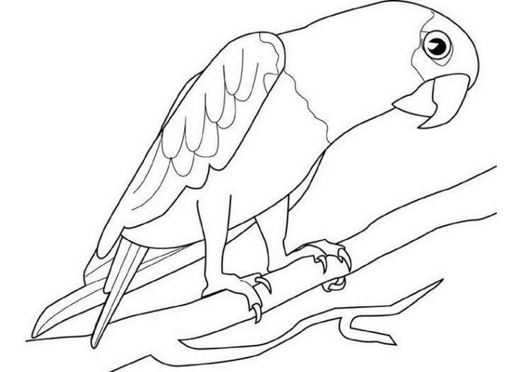 ausmalbilder papagei 04  ausmalbilder papagei