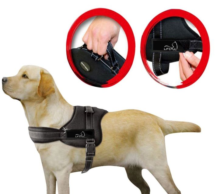 Lifepul(TM) No Pull Dog Vest Harness - Dog Body Padded Vest - Comfort Control for Large Dogs in Training Walking - No More Pulling, Tugging or Choking -- Details can be found by clicking on the image.
