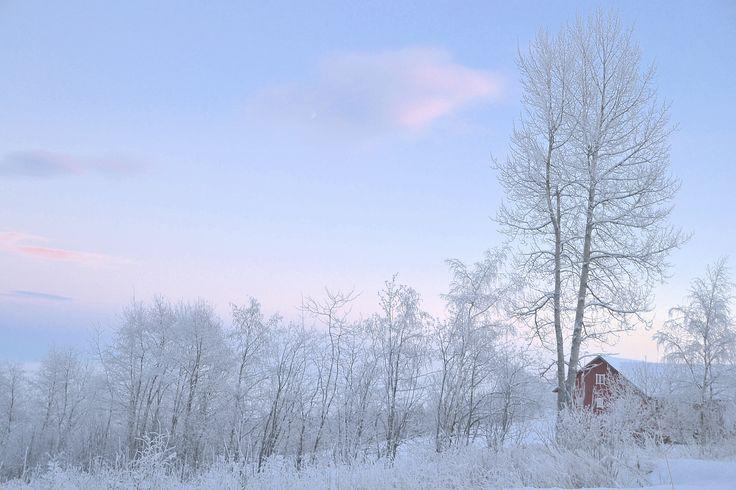 Vinterstemning Kollsvegen.