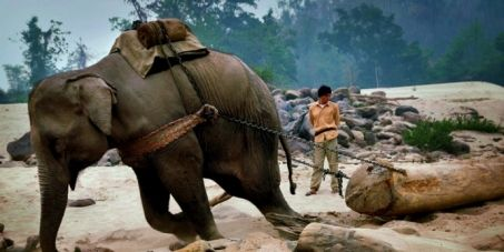 NBC: Stop Elephant Exploitation on NBC and Worldwide! Please sign this petition to help our elephants throughout the world.  NBC can carry the message of our cause to millions of their viewers.  http:// secure.avaaz.org/en/petition/NBC-Stop-exploitation-on-NBC/